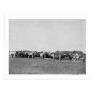 Caballos reunidos por la fotografía de los tarjetas postales