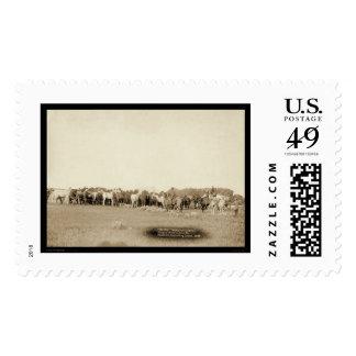 Caballos Roped por los vaqueros SD 1887 Envio