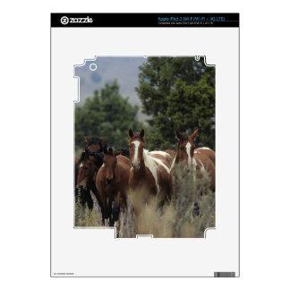 Caballos salvajes 2 del mustango iPad 3 skin