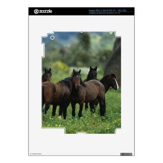Caballos salvajes 3 del mustango iPad 3 pegatinas skins