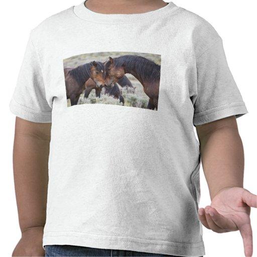 Caballos salvajes (caballus del Equus) en Camisetas