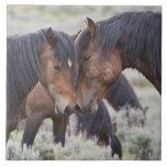 Caballos salvajes (caballus del Equus) en sagebrus Azulejo Cuadrado Grande