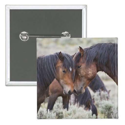 Caballos salvajes (caballus del Equus) en sagebrus Pin Cuadrado