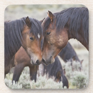 Caballos salvajes (caballus del Equus) en sagebrus Posavaso