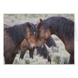 Caballos salvajes (caballus del Equus) en sagebrus Tarjeta De Felicitación