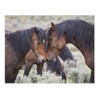 Caballos salvajes (caballus del Equus) en Postales