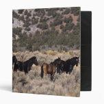 Caballos salvajes del mustango en el desierto 2