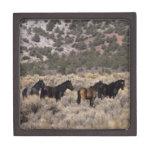 Caballos salvajes del mustango en el desierto 2 caja de joyas de calidad