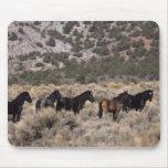 Caballos salvajes del mustango en el desierto 2 mouse pad