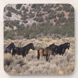 Caballos salvajes del mustango en el desierto 2 posavasos de bebida