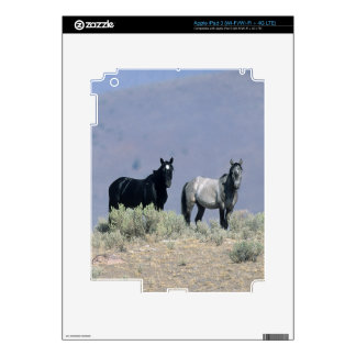 Caballos salvajes del mustango en el desierto 3 iPad 3 pegatinas skins