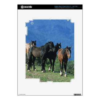 Caballos salvajes del mustango en las montañas iPad 3 skins