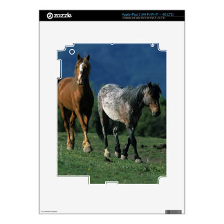 Caballos salvajes del mustango iPad 3 skins