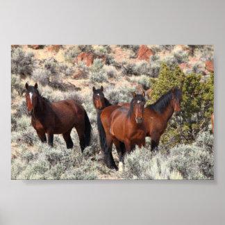 Caballos salvajes del valle #6 del Palomino Póster