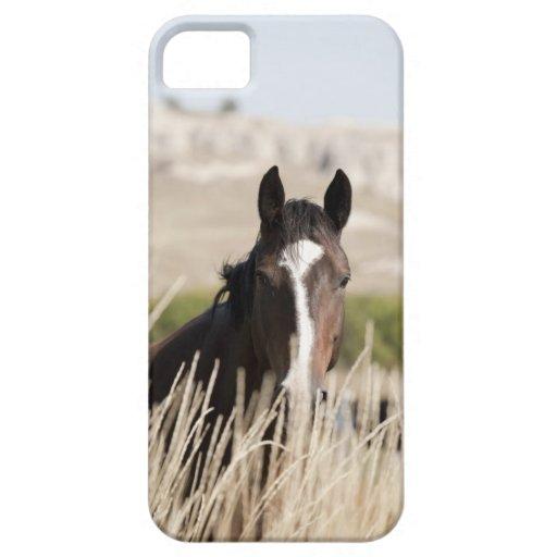 Caballos salvajes en Dakota del Sur Funda Para iPhone SE/5/5s