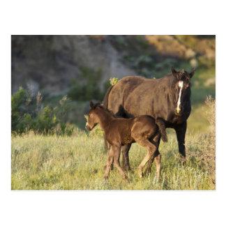 Caballos salvajes en el parque nacional de tarjetas postales