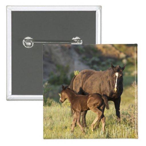 Caballos salvajes en el parque nacional de Theodor Pin Cuadrado
