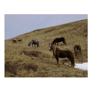 Caballos salvajes en la isla de Unalaska Postal