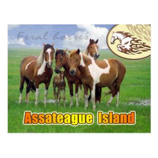 Caballos salvajes, isla de Assateague nacional. Tarjetas Postales