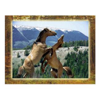 Caballos salvajes que luchan, montaña de Pryor, Postal