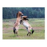 Caballos salvajes que luchan tarjeta postal