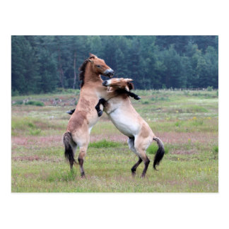 Caballos salvajes que luchan tarjetas postales