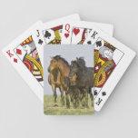 Caballos salvajes salvajes 3 del caballus del barajas de cartas