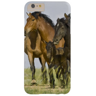 Caballos salvajes salvajes 3 del caballus del funda de iPhone 6 plus barely there