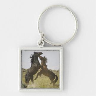 Caballos salvajes salvajes del caballus del Equus  Llaveros