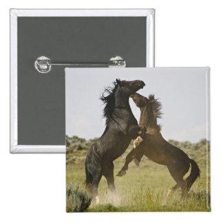 Caballos salvajes salvajes del caballus del Equus  Pins