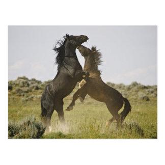 Caballos salvajes salvajes del caballus del Equus Postales
