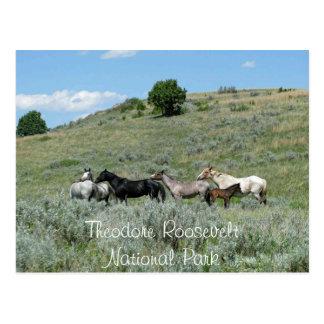 Caballos salvajes, Theodore Roosevelt NP, Dakota d Postal