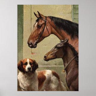 Caballos y arte del vintage de St Bernard Póster