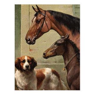 Caballos y arte del vintage de St Bernard Tarjeta Postal