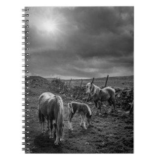 Caballos y cuaderno del potro