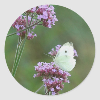 Cabbage Butterfly Classic Round Sticker