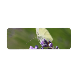 cabbage butterfly on lavendel label