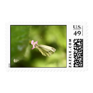 cabbage butterfly on pink wildflower postage