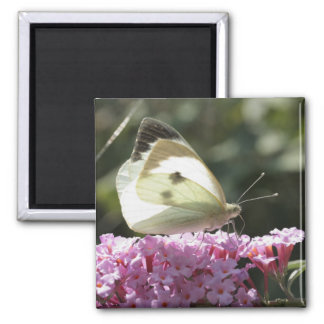 cabbage butterfly on syringa 2 inch square magnet