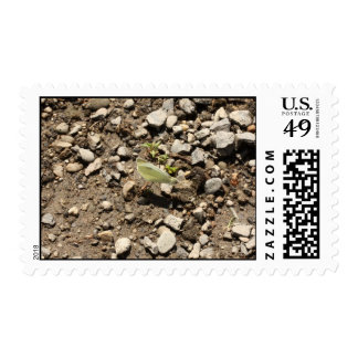 cabbage butterfly on the rocks postage