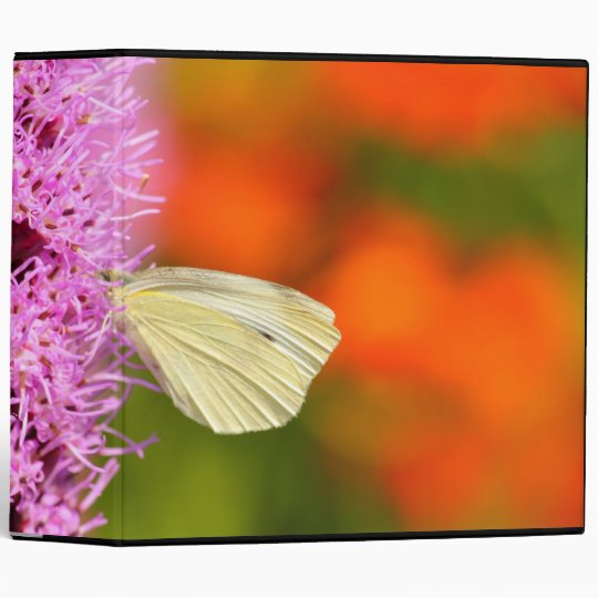 cabbage butterfly with orange background 3 ring binder
