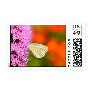 cabbage butterfly with orange background stamp