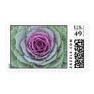 Cabbage head stamp #1