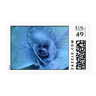 Cabbage hue postage