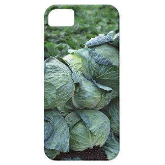 Cabbage iPhone SE/5/5s Case