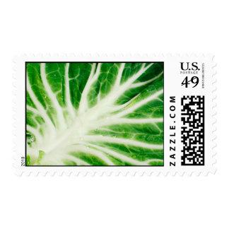 Cabbage leaf postage stamp