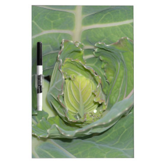 Cabbage Leaves Dry-Erase Board