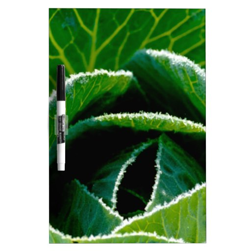 Cabbage, one of your five a day Dry-Erase whiteboards
