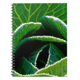 Cabbage one of your five a day note books