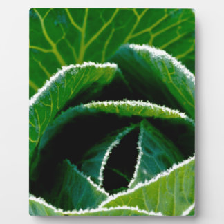 Cabbage one of your five a day photo plaque